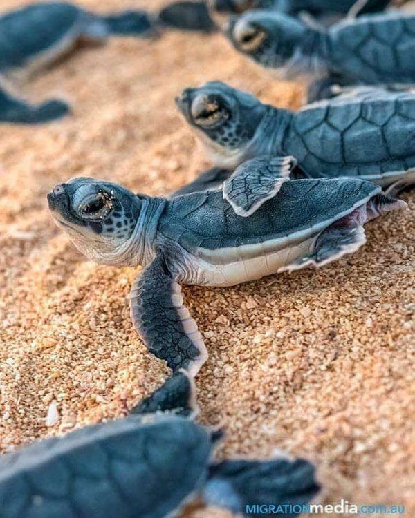 paga-hill-estate-gudmundur-gummi-fridriksson-turtles-papua-new-guinea